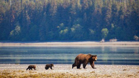 Biden planea restaurar las protecciones forestales de Alaska despojadas de Trump