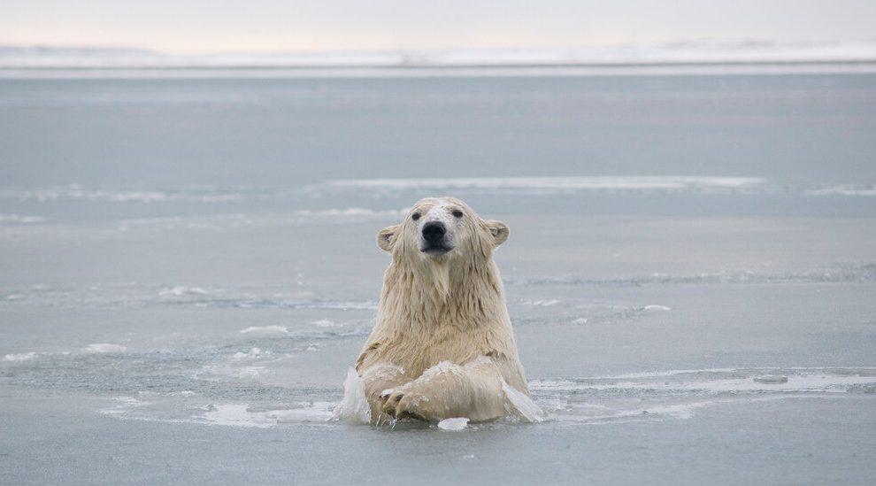 Biden suspende arrendamientos de perforación en el Refugio Nacional de Vida Silvestre del Ártico