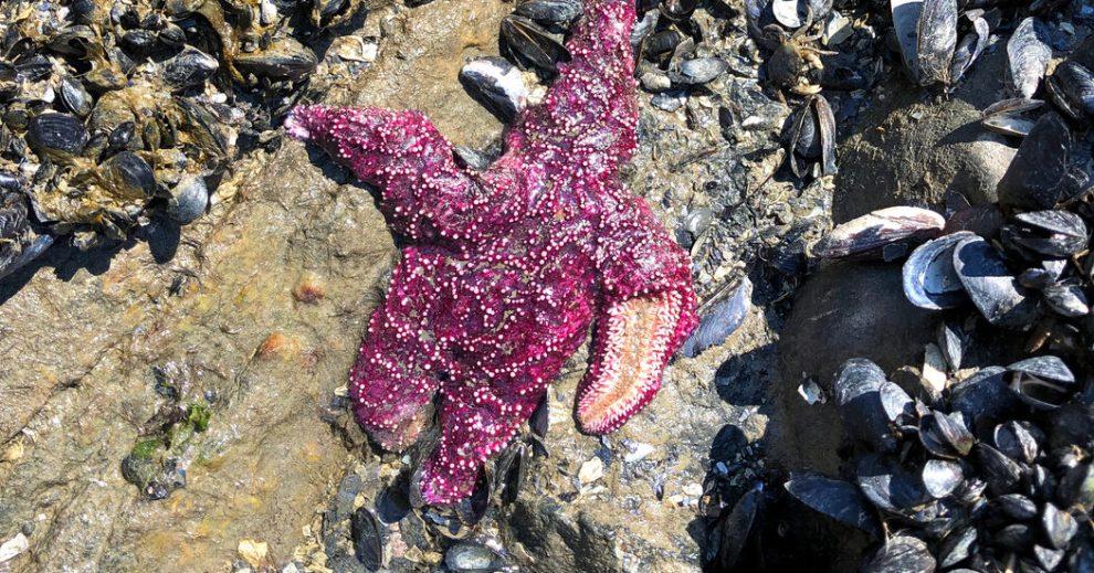 Como en 'Películas postapocalípticas': Ola de calor mató a la fauna marina en masa