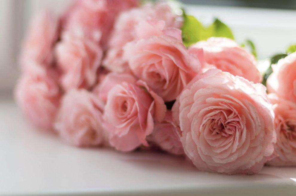 enviar flores