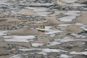 El hielo marino del Ártico alcanza su nivel anual más bajo, pero no tan bajo como en los últimos años