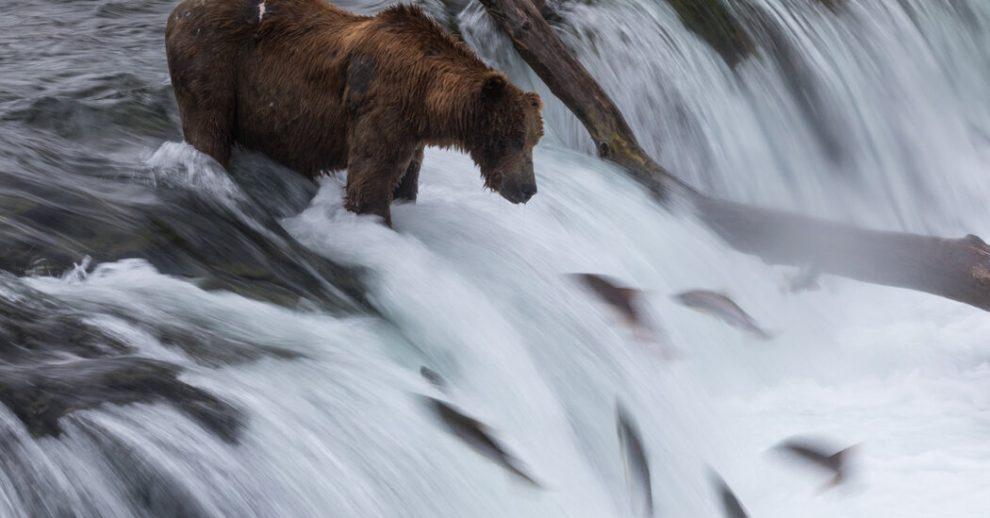 La administración de Biden toma medidas para proteger la bahía de Bristol, Alaska