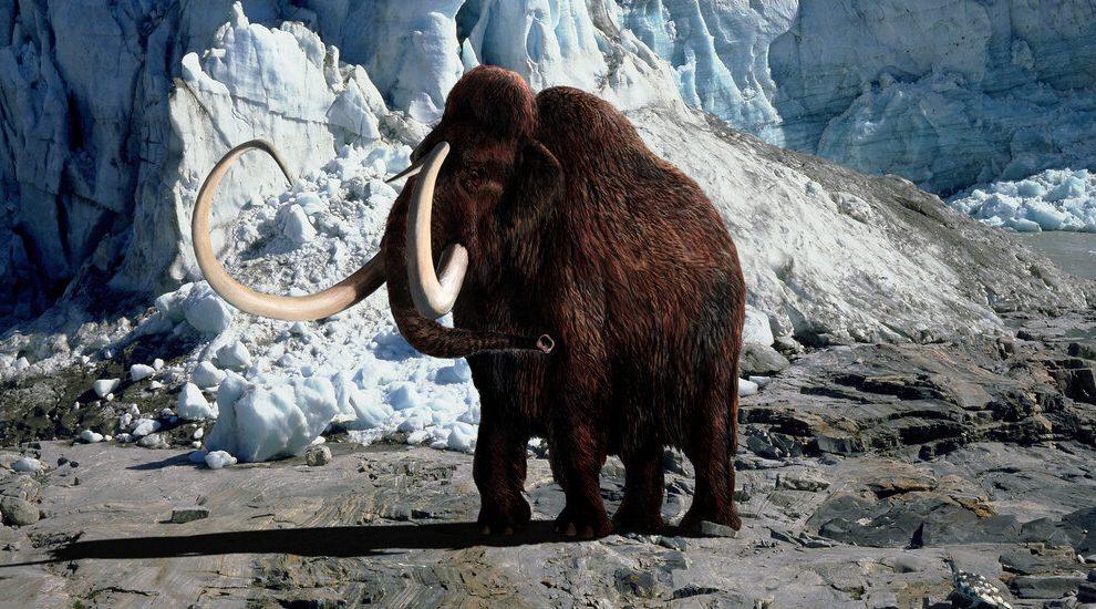 Una nueva empresa con una misión salvaje: traer de vuelta al mamut lanudo